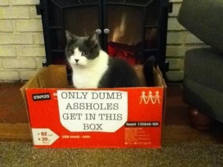 19 забавных кошек, сделавших неправильный выбор