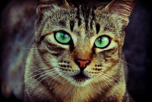 Пугающие факты о кошках