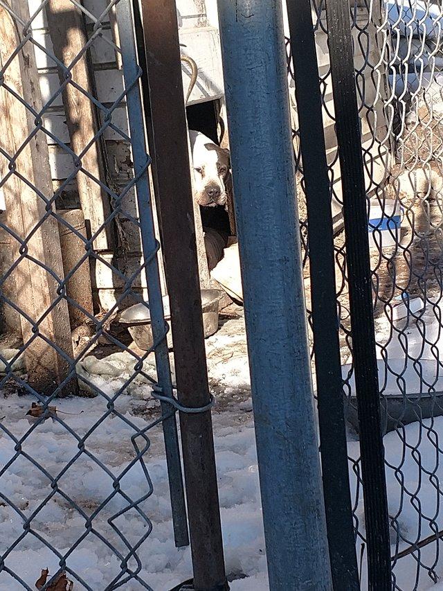 Семья уехала, а собаку оставила на заднем дворе с разбитым сердцем… Но счастье нашло ее само!