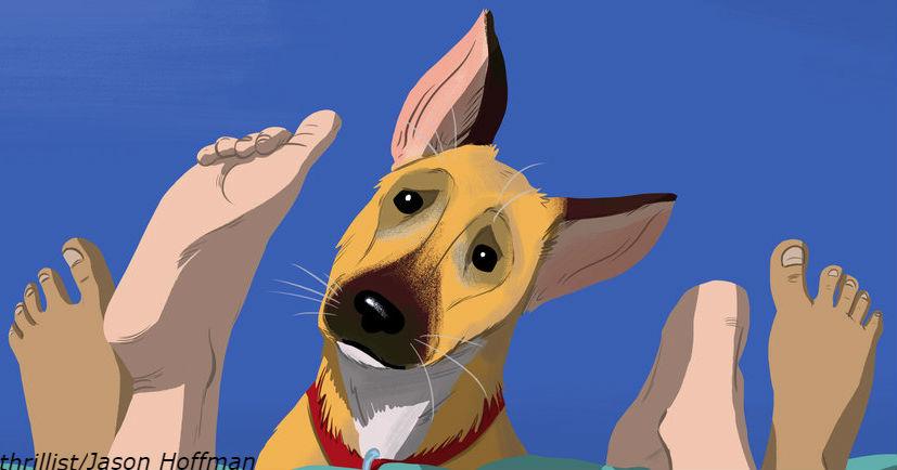 Собаки действительно узнают плохих людей по запаху