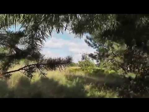 Прикамье (Лариса Струина)