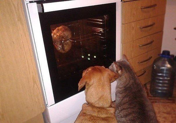 Поставил курицу-гриль в духовку, возвращаюсь через 15 минут и вижу такое :)