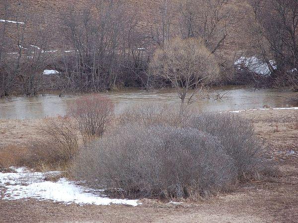 Рыболовы путают ельцов с уклейкой или голавлем