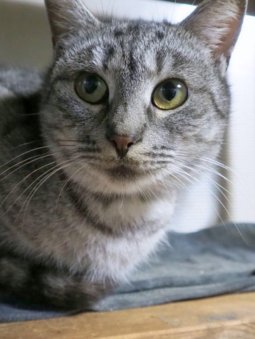 А вдруг Милослава именно та кошка, которую вы ищете?..