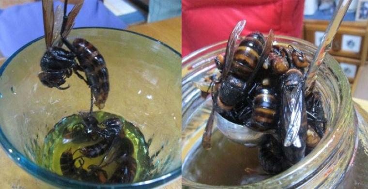 10. Япония: напиток из яда шершня в мире, еда