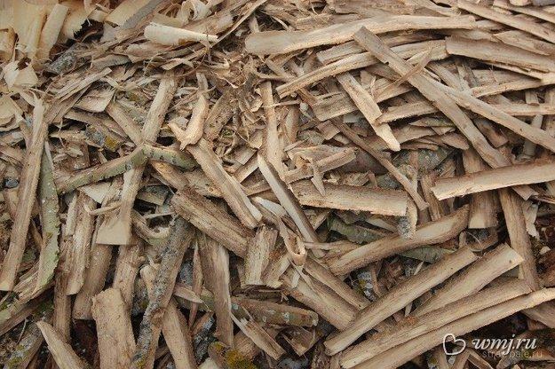 Лечебные свойства осиновой коры