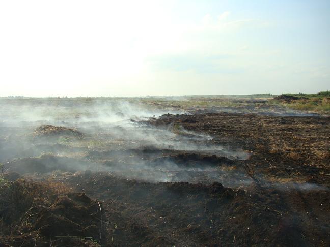 Лесные, степные, торфяные пожары. Что делать?