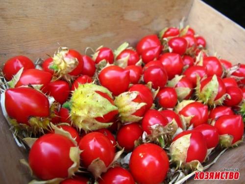 Знакомьтесь - личи-томаты