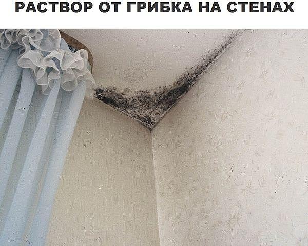Борьба с грибком на стенах