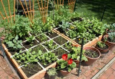 Как организовать полноценный огород на одной сотке