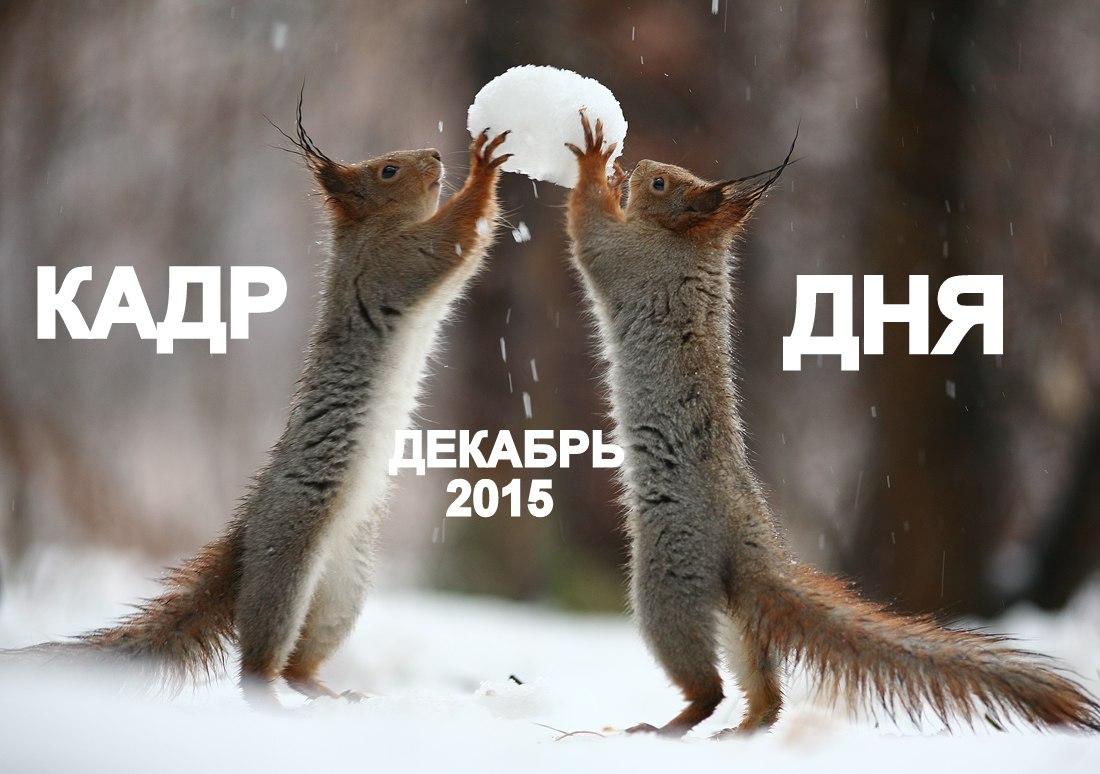 Кадр дня: Любяка — зевака!))