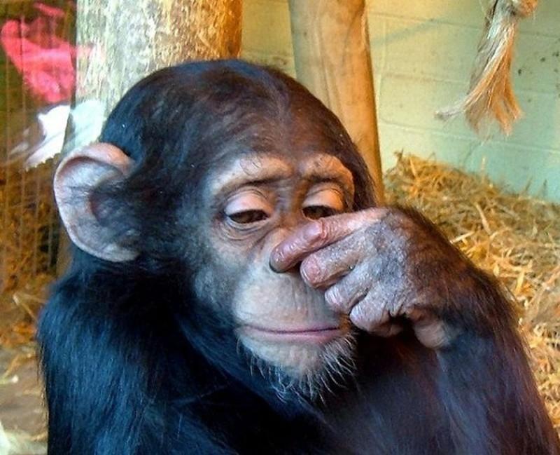 talkinganimals09 10 удивительных животных, которые умеют говорить