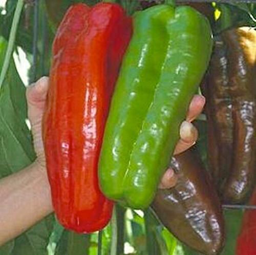 Гигантский болгарский перец дача, овощи