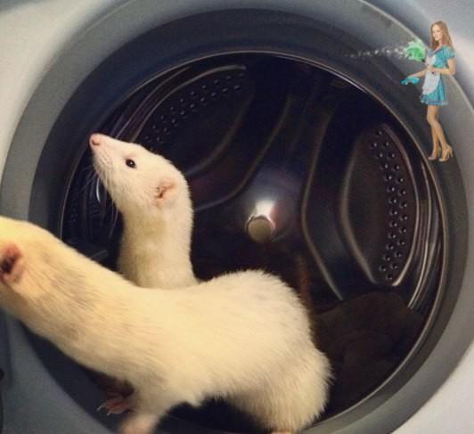 Кaк помыть стирaльнyю мaшинy?
