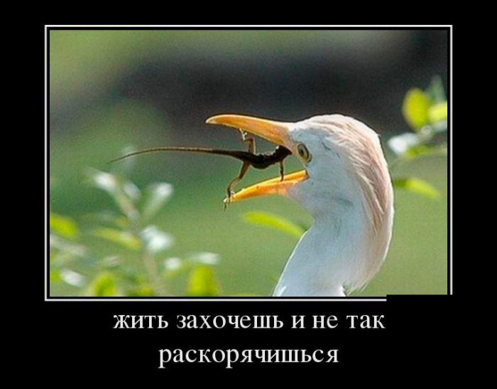 http://mtdata.ru/u24/photo8F07/20654725065-0/original.jpg