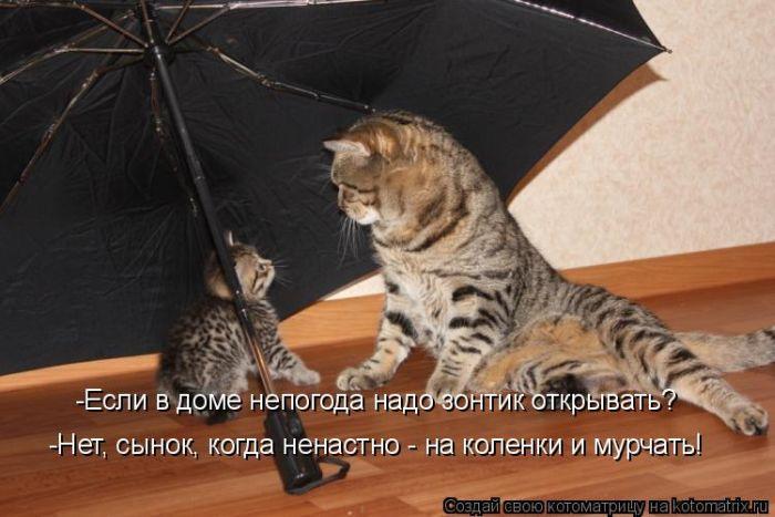 """Веселые котоматрицы #47 (45 штук) """" Ex.BY - фотоприколы, фото девушек и животных"""