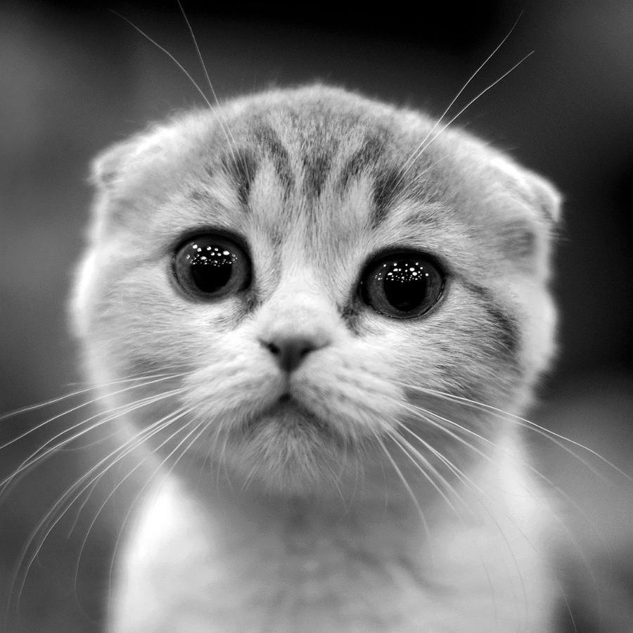 Лучшие фотографии кошек за 2014 год по версии сайта 500px
