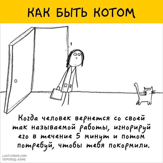 Как быть котом. Инструкция