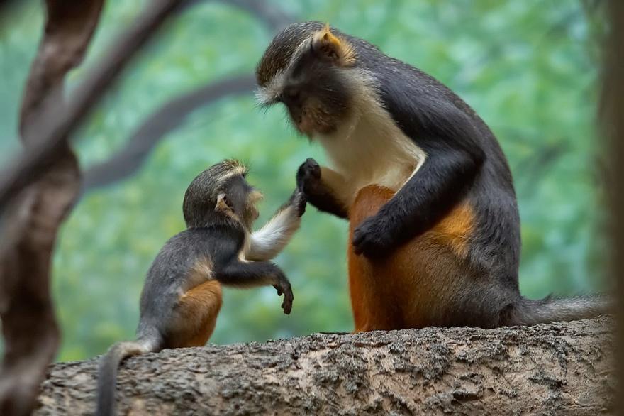 Животные, которые знают, что мамина любовь — самая сильная