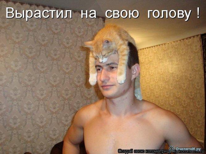 Юморная котоматрица 32