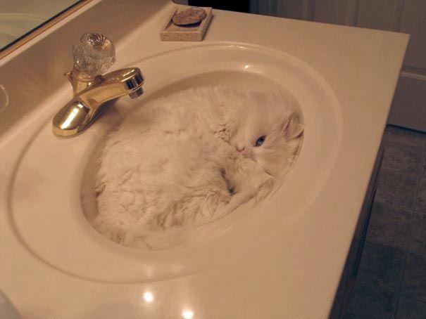 кошки сырые грязные во сне