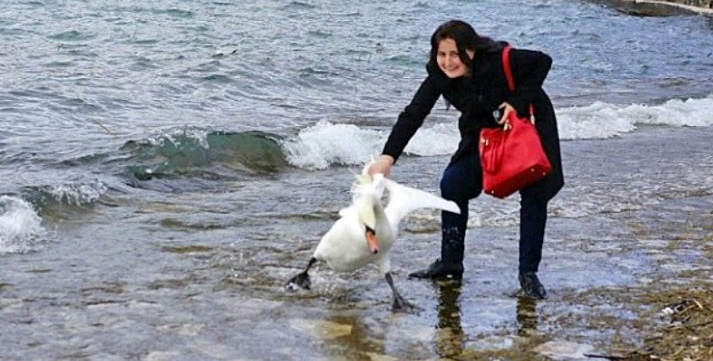 Ради селфи она вытащила из озера лебедя. Последствия ужасны…