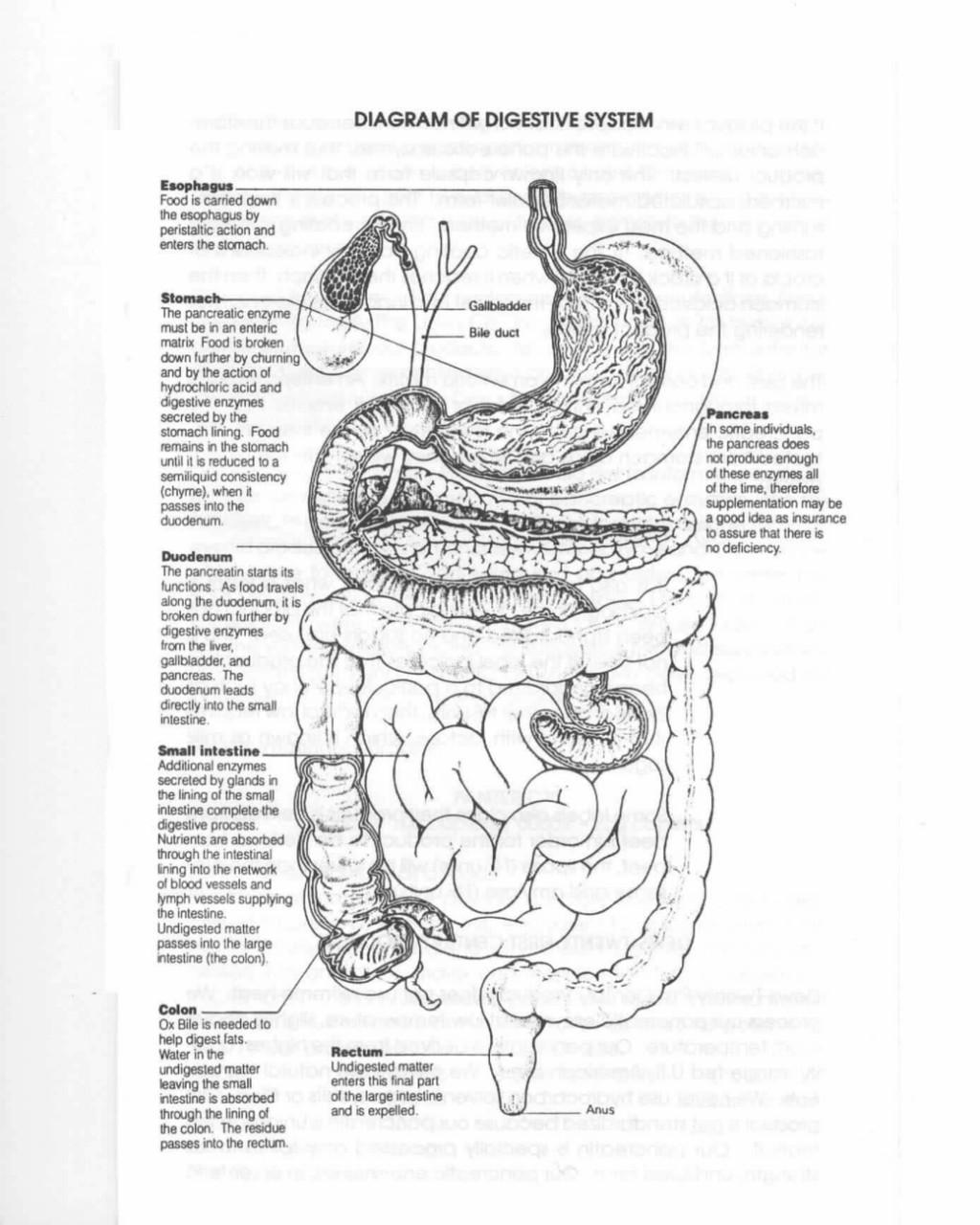 Физиология позднего приема пищи: еда, сон и ЖКТ ...