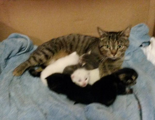 Мужчина, спасший бродячую кошку, подумал, что она просто большая, однако его ждал сюрприз