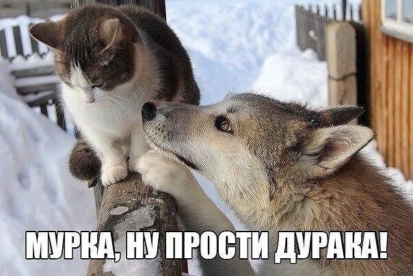 Как мило)))