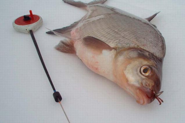 видео рыбалка на леща ночью