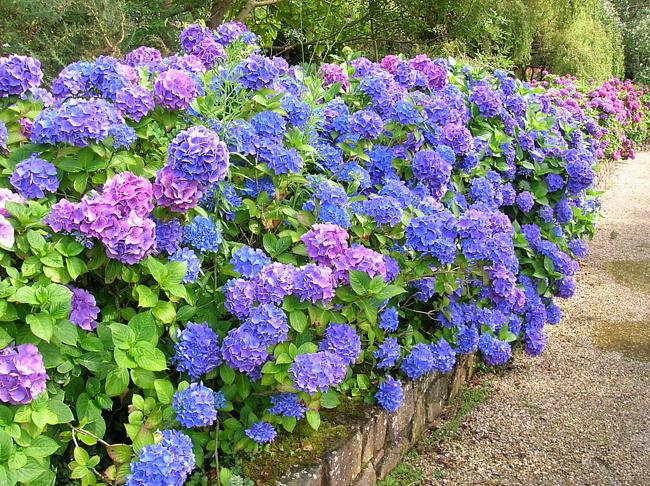 Растения для вашего сада Компания по продаже растений
