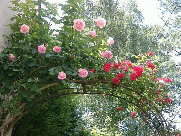 4497432_rosesingardeninspiration12 (600x450, 156Kb)