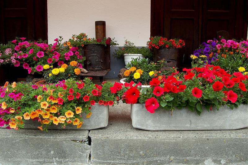 ЦветоЧные балконы и окна.