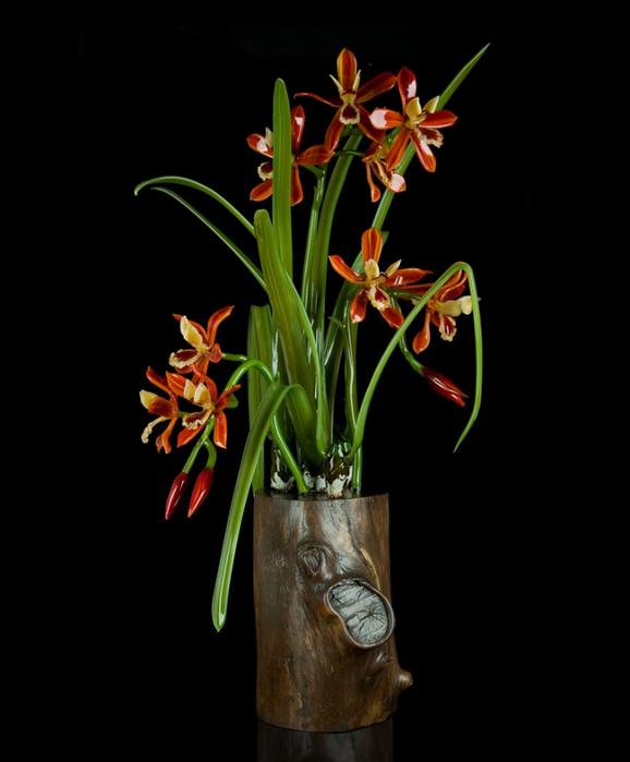 encyclia-tampensis (578x700, 190Kb)