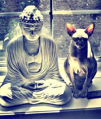 Фото Путь Медитации.
