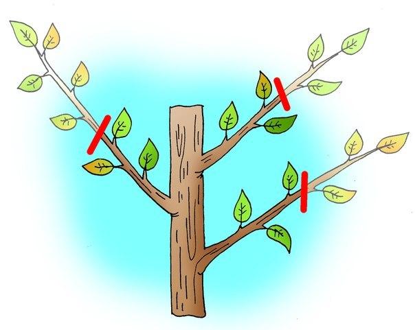 Способы заставить деревья плодоносить быстрее