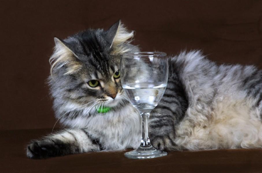 Рюмка для кота
