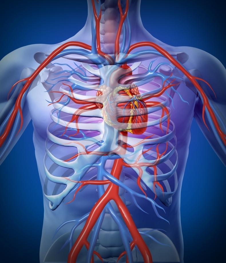 Как проверить здоровье сердца