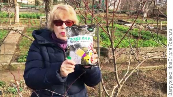 Белить или не белить деревья в феврале? Когда же действительно пора и зачем это делать (видео)