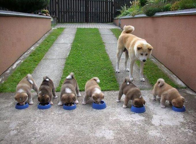 11. «Не спешите, аккуратней!» животные, потомство, собаки