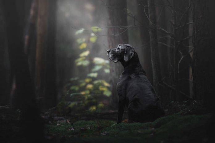 Лучшие фото собак 2018 года