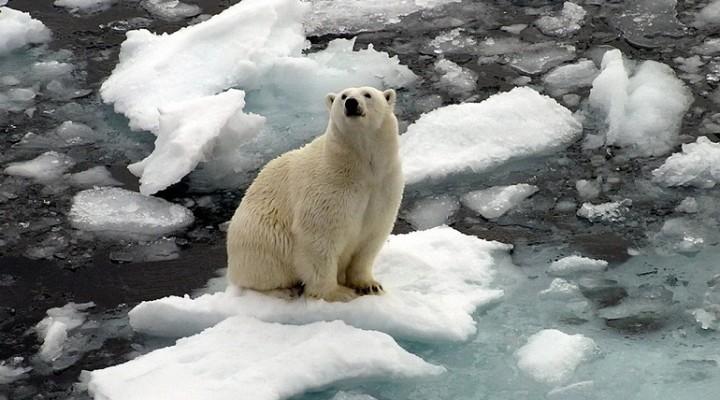 27 февраля — Международный День Белого Медведя