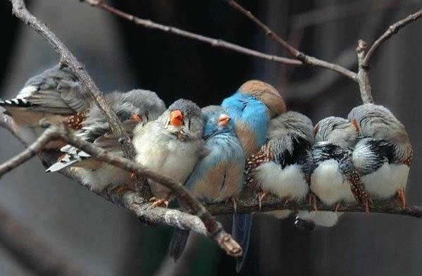 Замёрзшие птицы
