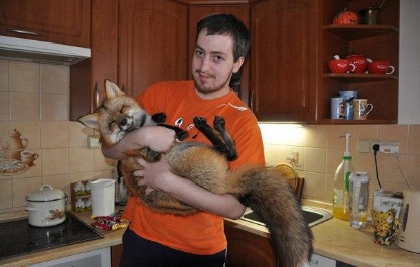 Парень спас лису от гибели, и вот какой она стала