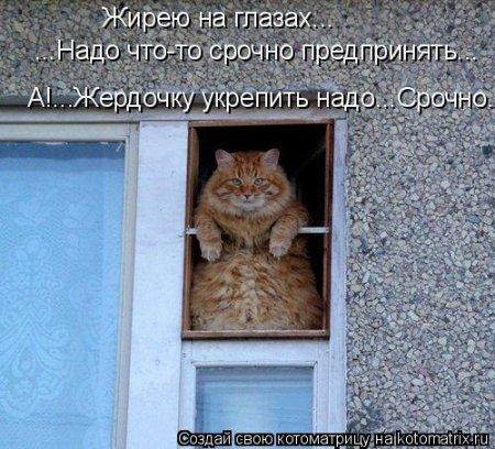 Прикольные котоматрицы для активных как ты.