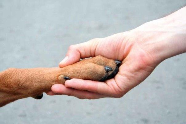 Нашим друзьям  посвещается!          Собаке человек друг!  собака, стихи, фото.