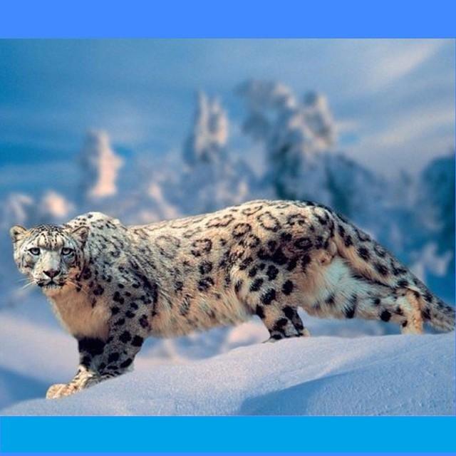 Интересно познавательные фото! Интересно познавательные фото!, животные, история, факты