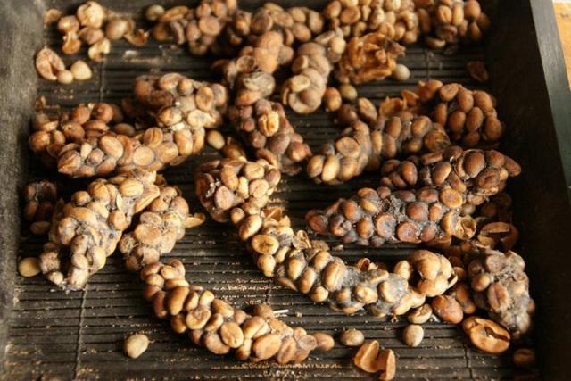 Дорого и неаппетитно: 9 деликатесов, которые у большинства людей вызывают отвращение...