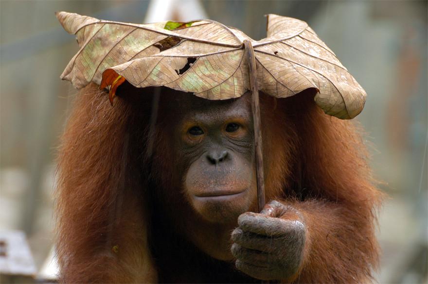 «Ну, какой нашёл, такой и есть» животные, зонтик
