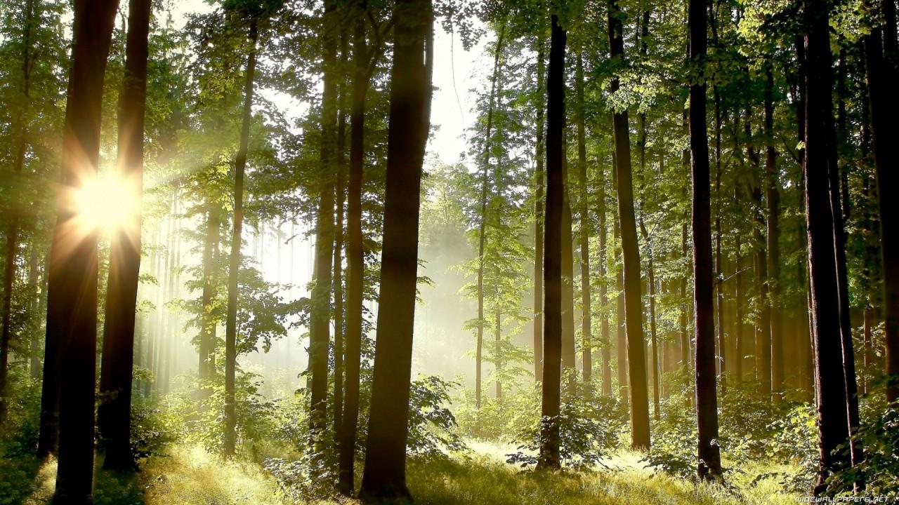 Почему желтеют листья и зачем растению столько семян